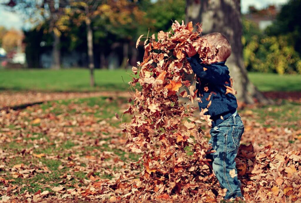 落ち葉で遊んでいる男の子の写真
